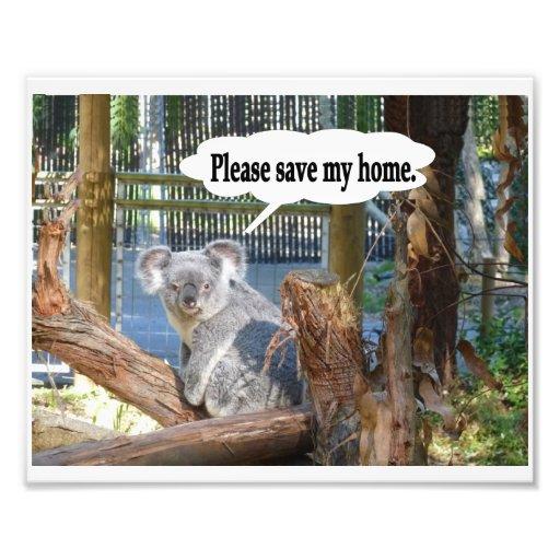 """La koala """"ahorra por favor mi hogar"""". impresion fotografica"""