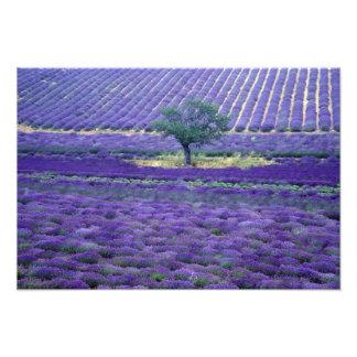 La lavanda coloca Vence Provence Francia Impresion Fotografica