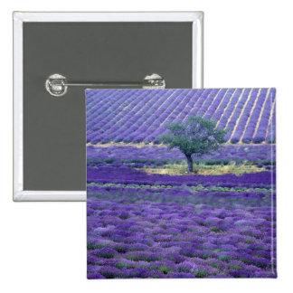 La lavanda coloca, Vence, Provence, Francia Pins