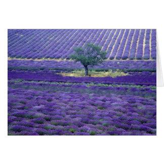 La lavanda coloca, Vence, Provence, Francia Tarjeta De Felicitación