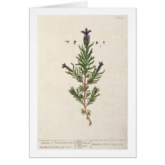 La lavanda francesa, platea 241 'de un Herbal curi Tarjeta De Felicitación
