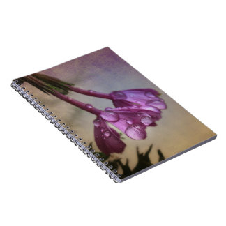 La lavanda rosada florece cuaderno