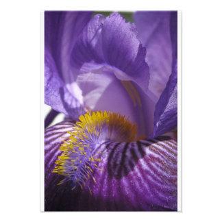 La lengua de los iris anuncios