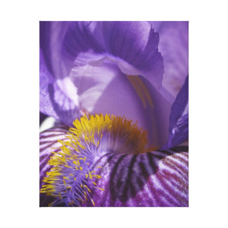 La lengua de los iris impresión en lienzo