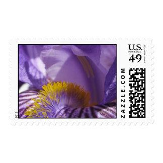La lengua de los iris sellos