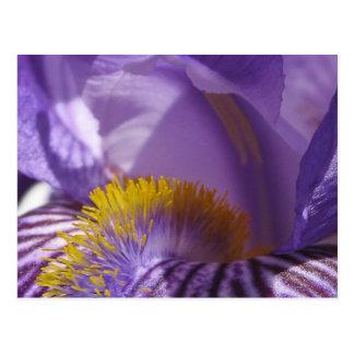 La lengua de los iris postales