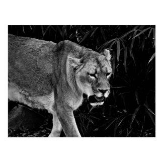 La leona postales