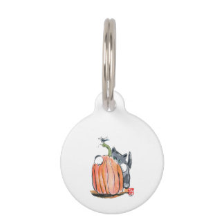 La libélula lleva el gatito a través del remiendo placas de mascota