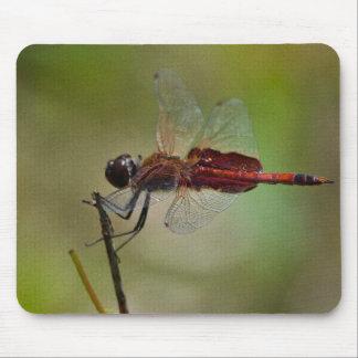 La libélula roja seca sus alas en el sol tapete de raton
