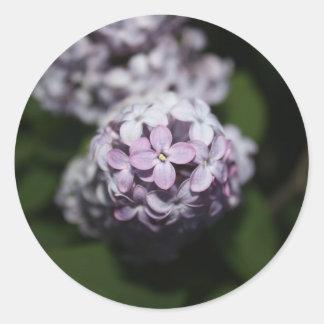 La lila florece al pegatina