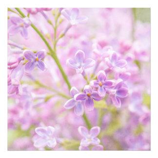 La lila florece la niebla cojinete