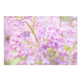 La lila florece la niebla fotografía