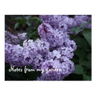 La lila florece la postal