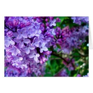 La lila florece la tarjeta de felicitación