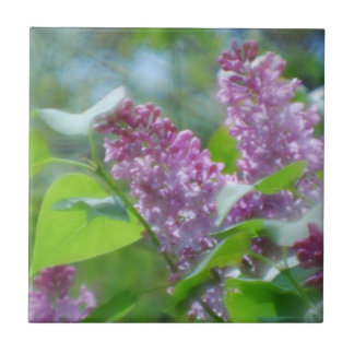 La lila púrpura florece la teja