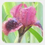 La lluvia cubrió el iris calcomania cuadradas personalizada