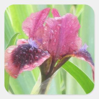 La lluvia cubrió el iris calcomanía cuadradas