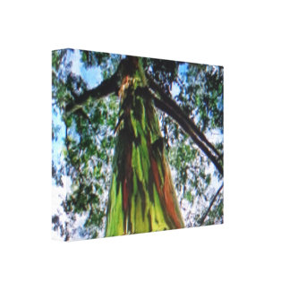 La lona envuelta eucalipto del arco iris lona envuelta para galerías