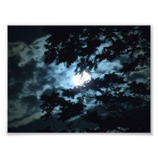 La luna ilumina la noche detrás de ramas de árbol fotografías