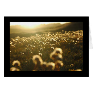 La luz del sol florece la tarjeta de felicitación