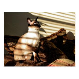 La luz del sol sombrea el gato siamés postales