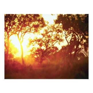 La luz pasada de Sun, en niebla y árboles, Austral Tarjetas Publicitarias