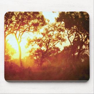 La luz pasada de Sun, en niebla y árboles, Austral Mouse Pads