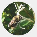 La madreselva manosea la abeja pegatina redonda