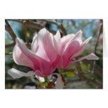 La magnolia rosada florece tarjeta de la fotografí