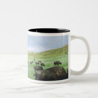 La manada del bisonte pasta la hierba de pradera taza de dos tonos