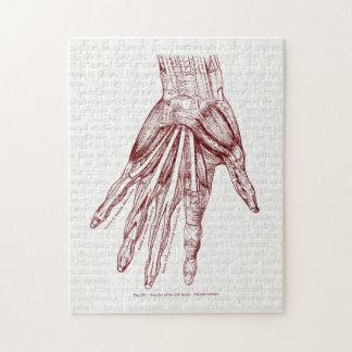 La mano humana de la anatomía Muscles rojo Puzzle