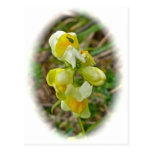 La mantequilla 'n Eggs el Wildflower Tarjetas Postales