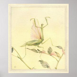 La MANTIS RELIGIOSA - ejemplo de libro del insecto Poster