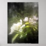 la manzana florece #2, blanco y negro focal impresiones