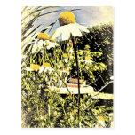 La manzanilla florece la postal (del estilo antigu
