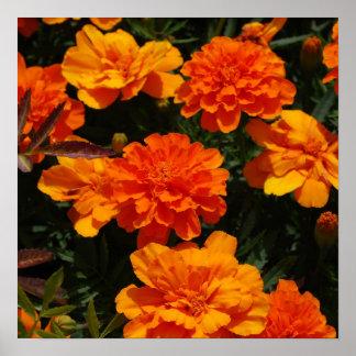 La maravilla anaranjada florece el poster