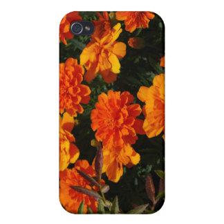 La maravilla anaranjada florece la caja del iPhone iPhone 4 Protectores