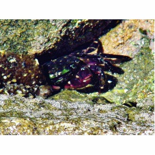 La marea del océano del cangrejo reúne la ensenada fotoescultura vertical