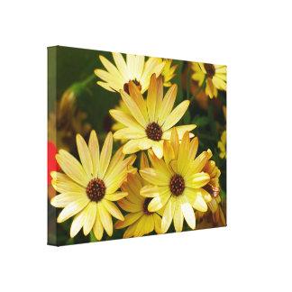 La margarita amarilla del Gerbera florece arte de Impresiones En Lienzo Estiradas