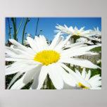 La margarita florece el cielo azul de las margarit