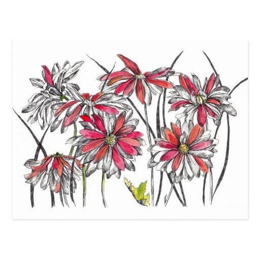 La margarita pintada florece el dibujo botánico de tarjeta postal
