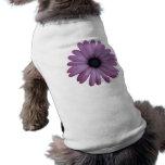 La margarita púrpura tiene gusto de los ecklonis d camisa de mascota