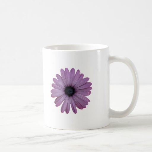 La margarita púrpura tiene gusto de los ecklonis d taza de café