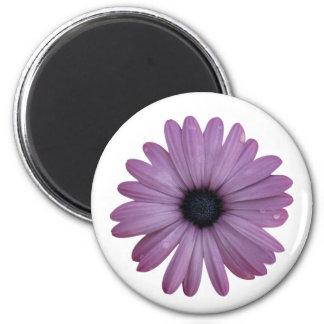 La margarita púrpura tiene gusto de los ecklonis imán redondo 5 cm