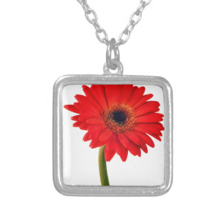 La margarita roja de Gerber florece la flor floral Collar Plateado