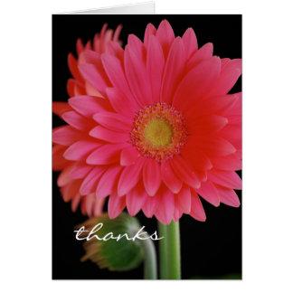 La margarita rosada del Gerbera le agradece cardar Felicitación