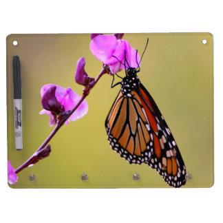 La mariposa besa al tablero seco del borrado tablero blanco