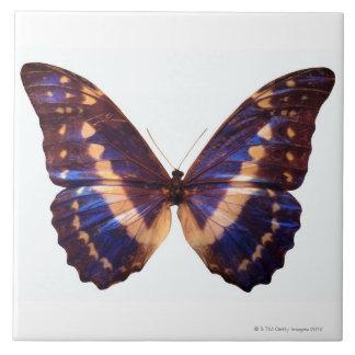 La mariposa con las alas separó 3 azulejo cuadrado grande