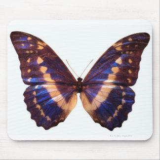 La mariposa con las alas separó 3 tapetes de raton