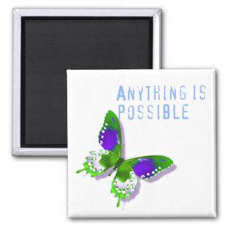 La mariposa cualquier cosa es imán posible